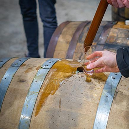 Drinking Samples of Chinkapin oak Casks