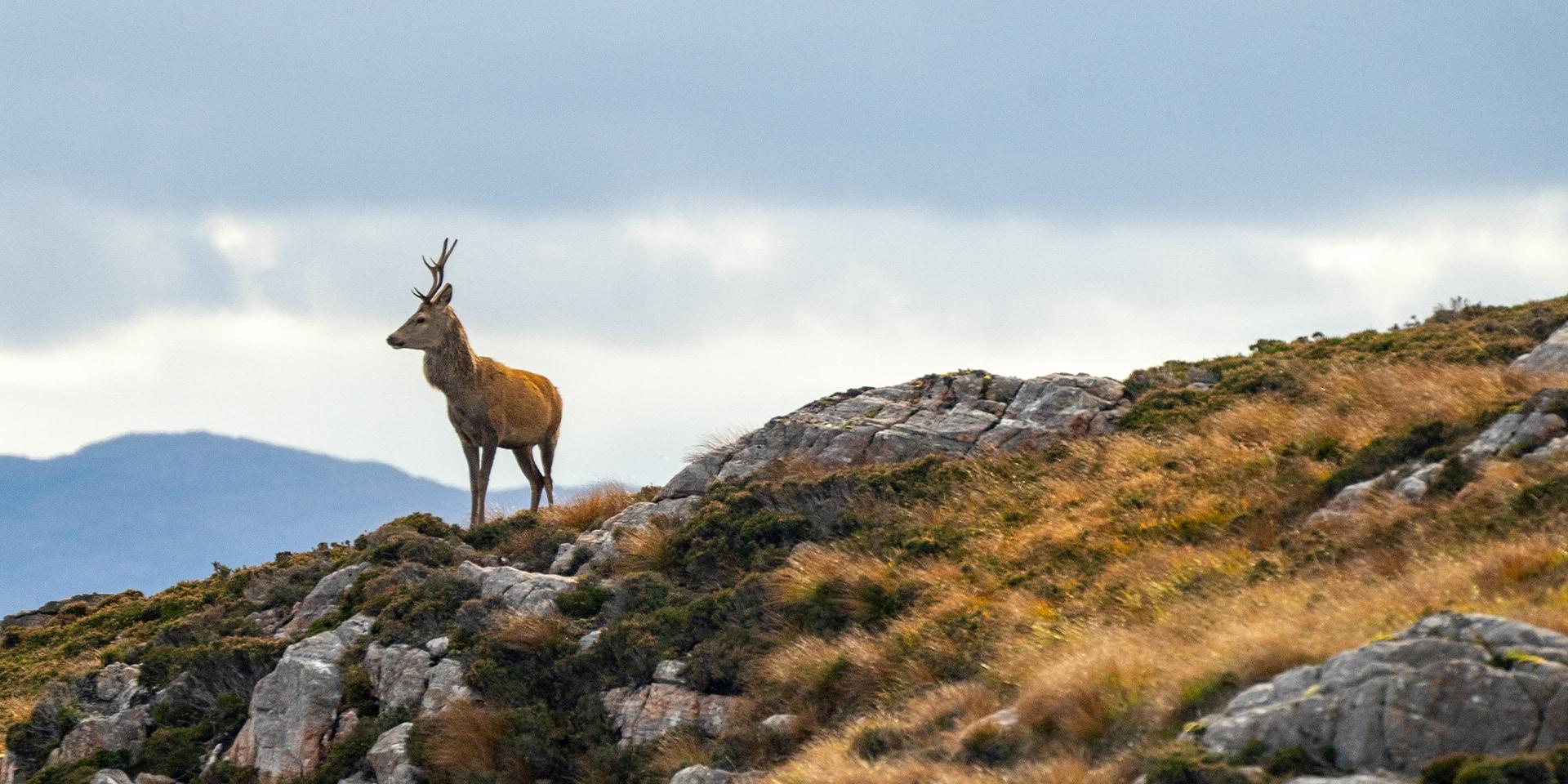 Deer Rainey's Wall Full Width Header